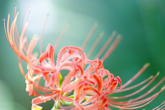 In the light (Hitoshi char♪) Tags: sigma sdquattro flower