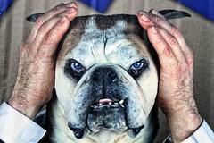 01 (2) (roberke) Tags: hands handen dog hond portrait portret artwork deborahsengl 2012 andcut huisdier tanden