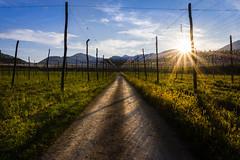 Last sun rays (novak.mato91) Tags: green slovenia slovenija landscape nature nikon d7200 tamron70200 sigma1750 sunset sunrise geoslo