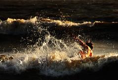 Humpty Dumpty went to the beach (Debmalya Mukherjee) Tags: juhu mumbai fall beach water waves splash debmalyamukherjee canon550d 18135