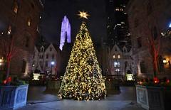 Holiday 2016, 12.03.16 (gigi_nyc) Tags: nyc newyorkcity holiday holiday2016 lottenewyorkpalace newyorkpalace christmas christmastree christmas2016