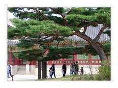 Auprès de mon arbre... / Séoul - Corée (PtiteArvine) Tags: gyeongbokgung séoul corée asie arbre palais personnes