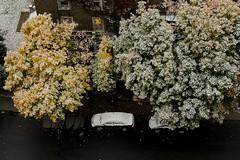 Matin enneigé, surprise! (ValerieBoulva) Tags: québec quebec canada neige snow octobre october fuji fujinon50mm20 automne fall