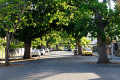 20181104-11-Tree lined street (Roger T Wong) Tags: 2018 australia hobart rogertwong sel70300g sony70300 sonya7iii sonyalpha7iii sonyfe70300mmf2556goss sonyilce7m3 tasmania avenue spring street trees