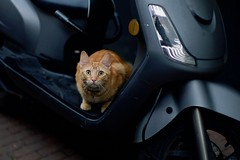 staredown (claudia 222) Tags: cat bike amsterdam jordaan street