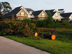P9200918 (photos-by-sherm) Tags: hurricane florence recovery wilmington nc debris pine trees cuttings chain sawing yards valley fall