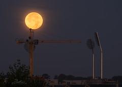 The Moon (....Daniel....) Tags: the moon bristol full waxing gibbous nikond800e nikkor200500 tree sky lunar