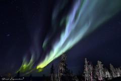 Aurora Borealis (Boreal Impressions) Tags: northwestterritories spectacularnwt spectacularnorthwestterritories nwt auroraborealis aurora