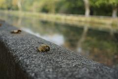 _DSC0375 (marco santagostino) Tags: natura nature pavia leaves foglie erba grass verde green rosso red orange arancione sonya7ii samyang samyangfe35mmf28af 35mm