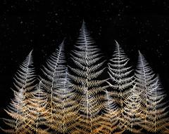 first snow over ferns (marianna_armata) Tags: p2840224 fern forest woods plant overlay composite snow bokeh marianna armata macro foliage flora leaf autumn canada firstsnow stars night starrynight