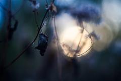 (cara zimmerman) Tags: helios nature ima 100acrewoods 100acres fall autumn leaves
