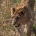 Safari Flickr (201 of 266)