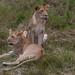 Safari Flickr (134 of 266)