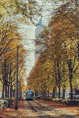 Frankfurt (Matthias Dengler || www.snapshopped.com) Tags: matthias dengler snapshopped street streets tram train tree trees alley city urban cityscape autumn fall fallen leaves messe fair messeturm tower frankfurt am main germany deutschland german travel discover explore create beautifulnature beautiful nature