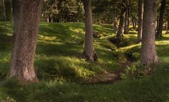 Through the trees (Tim Ravenscroft) Tags: woodland stream trees anundshög sweden hasselblad hasselbladx1d