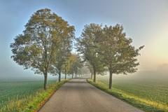 morning light (Claude@Munich) Tags: germany bavaria upperbavaria kleindingharting trees treelinedroad canopyroad road morning morningmist morningfog mist fog misty foggy claudemunich bayern oberbayern bäume strase allee morgennebel nebel neblig morgens morgen morgenlicht