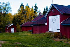 Eva`s Barn (langdon10) Tags: norway barn colourful farm tree