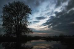 *** (pszcz9) Tags: przyroda nature natura naturaleza drzewo tree zachód słońca sunset odbicie reflection pejzaż landscape woda water beautifulearth sony a77