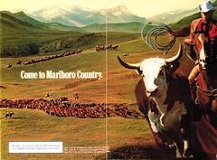 Why Grandpa Smoked (stephenweir) Tags: cigaretteads cowboysmokes cattle familycirclemagazine december1979 whygrandpasmokes outdoors motivators smokes