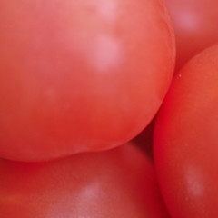 Ripe and Ready (magaroonie) Tags: tomatoes red 7dos single colour colourful thursday