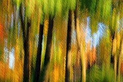 The Turning (Bad Kicker) Tags: trees autumn impressionism abstract icm intentionalcameramovement