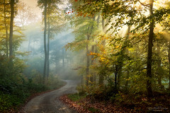 and it makes me wonder.... (Rita Eberle-Wessner) Tags: forest wald woods waldweg forestpath trail kurve curvy trees bäume buchen laubwald fall autumn herbst herbstwald nebel fog sonnenstrahle sunrays rays sunbeams tyndalleffect sonne sun laub herbstlaub odenwald