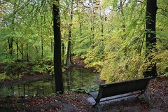(Uno100) Tags: forest leaf veluwe zoom beek huizen park posbank 2018 green tree bank couch