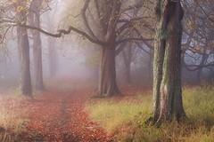 the alley (geraldkoenigsohn) Tags: autumn landscape fujixt1 zeissdistagon254 analog vintagelens colours fog alley forest