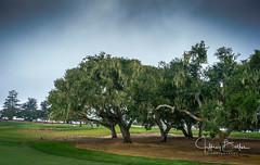 Seniors Golf at Blackhorse (Jeffrey Balfus (thx for 2.5 Million views)) Tags: monterey