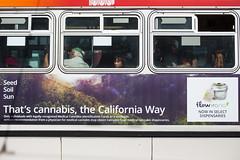 That's Cannabis (Thomas Hawk) Tags: america bayarea california mission missiondistrict sf sfbayarea sfmuni sanfrancisco usa unitedstates unitedstatesofamerica westcoast bus cannabis marijuana muni fav10