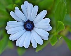 Hendrie Park, Royal Botanical Gardens, Hamilton, ON (Snuffy) Tags: flowers fall seasons hendriepark royalbotanicalgardens rbg hamilton ontario canada