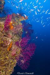 IMG_1386 (davide.clementelli) Tags: diving dive dives padi immersione immersioni ampportofino portofino liguria friends amici underwater underwaterlife sottacqua