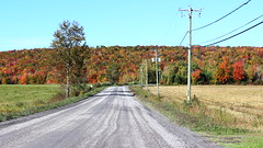 Country Road in Fall (pegase1972) Tags: country road route québec quebec qc canada estrie fall easterntownships foliage licensed dreamstime fotolia shutter shutterstock eyeem adobestock adobe