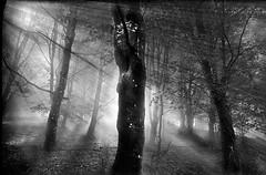 ARGIA ZURIBELTZ (juan luis olaeta) Tags: paisajes landscape blancoynegro zuribeltz blakwhite contraluz fujifilmxpro1 nieblas fog foggy laiñoa photoshop lightroom argia