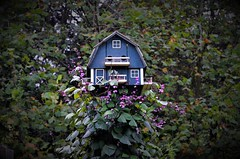 Birds and Blooms (danalcreek) Tags: hyacinthbean flower flowers bean pod purple green bird birdhouse martin vine leaf leaves
