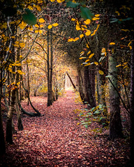 Tunnel (Northern Kev) Tags: autumn woodland trees sun beams nikon d7200 nikond7200 northumberland northeast leaves