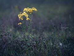 Alone but not lonely (Ingeborg Ruyken) Tags: 500pxs summer riverforeland empel instagram juli natuurfotografie avond july zomer floodplain evening flickr maasuiterwaarden