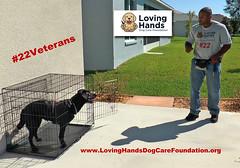 Loving Hands Dog Care Foundation Training (videodocdigital) Tags: 22veterans 22vets 22 usaveterans usmilitary serviedogs lovinghandsdogcarefoundation leesburg florida