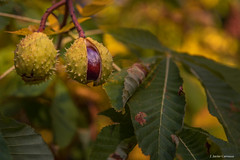 Nacimiento (AvideCai) Tags: avidecai tamron2470 otras otoño parque color