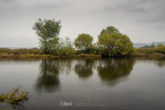 River - 11 Oct 2018 - 31.jpg (ibriphotos) Tags: autumn grey river cloud trees stirling riverforth dreich stirlingcastle weather leaves gray cloudappreciation cloudporn clouds skyporn