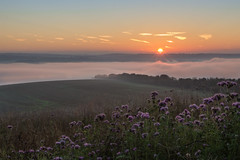 purple haze (Emma Varley) Tags: sunrise flowers purple mist fog inversion orange buryhill westsussex fields warm dreamy