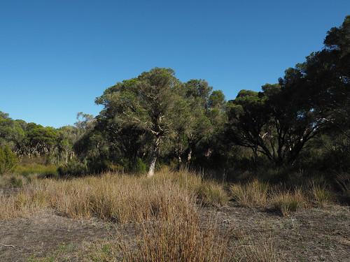 Bush Four Years Post Burning II – Red Moon Sanctuary, Redmond, Western Australia