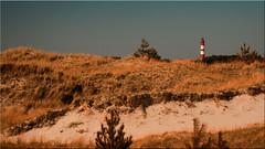 The lighthouse of the island Amrum (Ostseetroll) Tags: deu deutschland dünen geo:lat=5462374022 geo:lon=836613417 geotagged schleswigholstein leuchtturm insel lighthouse island sand dunes nordsee northsea olympus em5markii amrum