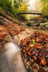 Autumncreek (Flavio Kolp) Tags: autumn herbst creek bach wald forest woods brücke bridge leaves wideangle ultrawide longexposure nikon schweiz switzerland natur nature appenzell