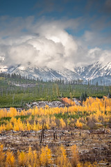 Mountain View (helenehoffman) Tags: autumn evergreen aspen forest trees glaciernationalpark pine montana northforkrd clouds snow mountain sky tree