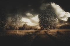 The Magic park .... (Julie Greg) Tags: park nature nautre colours canon sky clouds trees way england kent