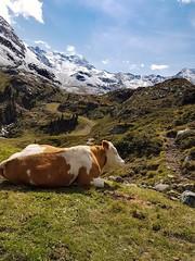 Alpine Schönheit (maya_immer) Tags: austria tirol kanauertal mountain alpen s7 samsungfoto landschaft