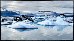 Common Eider (EXPLORE, Sep 28 2018 #53) (RKop) Tags: nikon 1020nikkoraf‑pdx raphaelkopanphotography jökulsárlón iceland wildlife