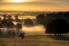 Misty Dawn (boogie1670) Tags: canon 5d mark iv sigma 150600mm sports lens woodland mist dawn sunrise golden light atmospheric