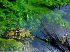 Green river (cosbrandt) Tags: gfx50s gf110mm provence france